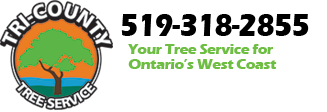 Tri-County Tree Service Grand Bend Inc.